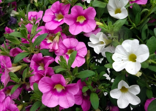 25% Off All Remaining Hanging Baskets