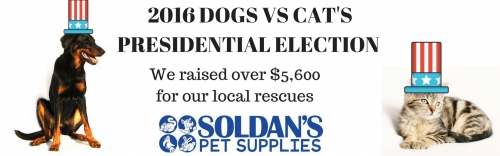 Dogs and cats election