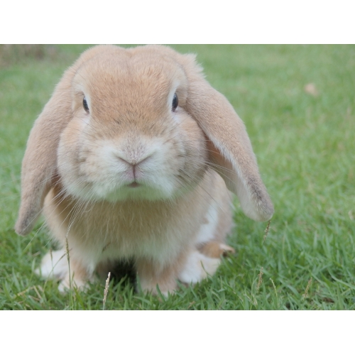 Featured Pet of the Month: Bunny