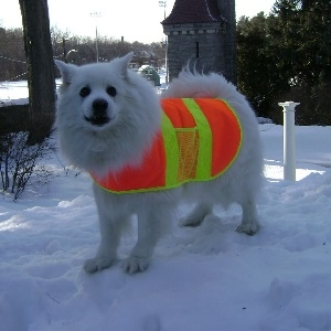 Spot 'N Trot Orange Nylon Safety Vest