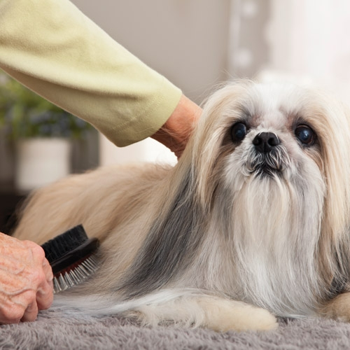 Dog Grooming Available at Incline Village