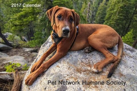 Pet Network 2018 Photo Contest