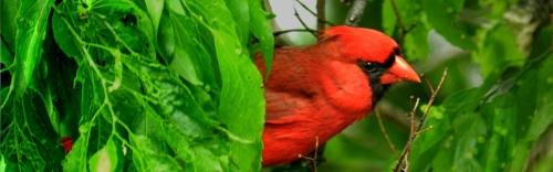 Wild Bird Feed & Supplies