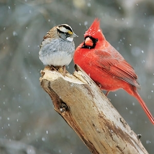 Attracting Birds to Your Feeder Seminar