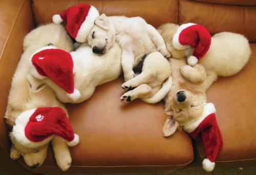 Dog & Puppy Adoption