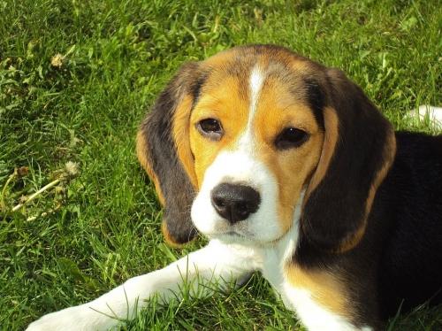 Dog Adoption Weekend