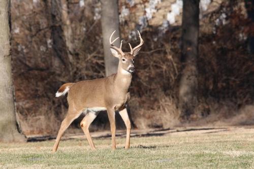 Deer Seminar