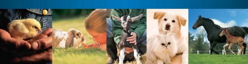 Blue Seal® Lifestyle Animals & Pets