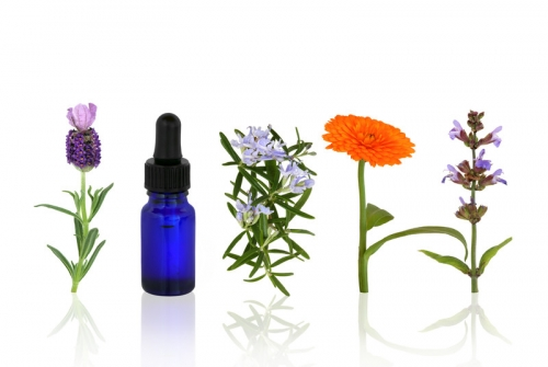 An Introduction to Flower Essences for animals