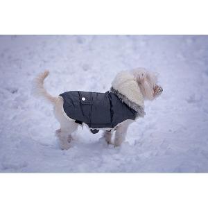 20% Off Dog Coats