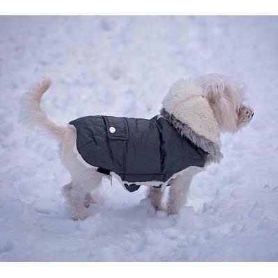 Dog Coats In Stock