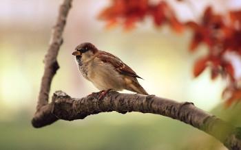 58th Annual Wild Bird Seed Pre-Order Sale