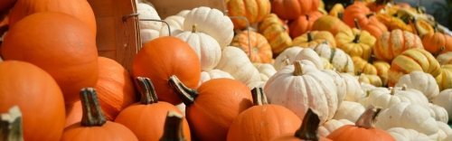 Save up to $3.00 off on Pumpkins & Gourds