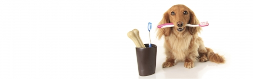 February is Pet Dental Month: