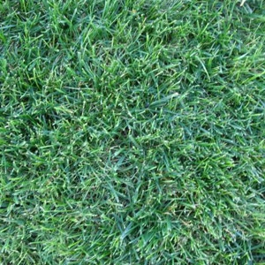 Rohrer Seeds Good Turf Lawn Mix