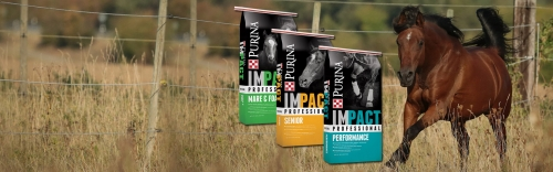 NEW: Purina Impact Professional Horse Feed!