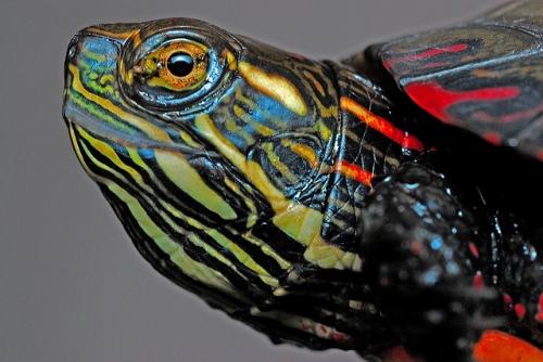 Turtle Care