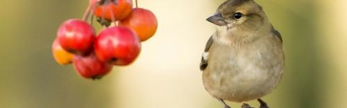Bird (Wild & Domestic)