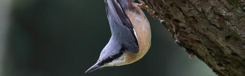 Attract Wild Birds