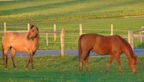Equine & Livestock