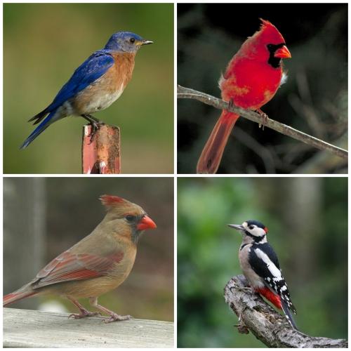 Advanced Wild Birding Stock-Up Sale