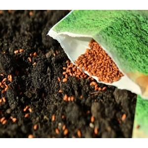 Bulk Garden Seed