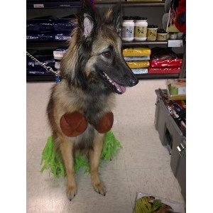 Hula Pet Halloween Costume