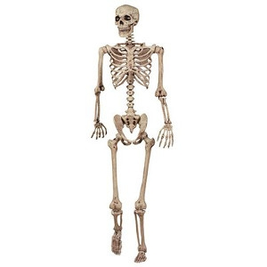 5', Life Size Realistic Pose N Stay Skeleton
