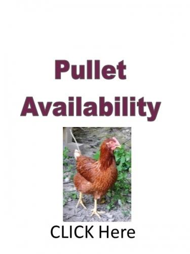 pullet order form