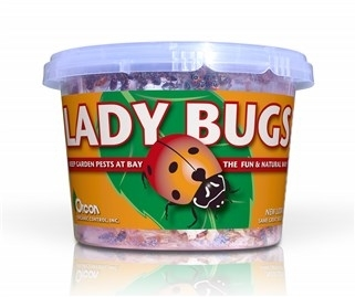 Lady Bugs (1500/Cup)