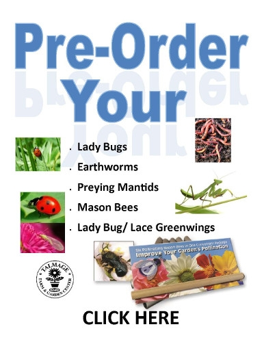Insect Pre-Order Form