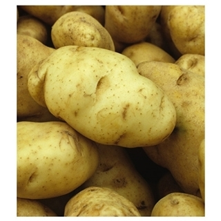 Seed Potatoes for Planting - Assorted Varieties