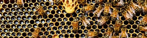 Bee Nuc Pick Up