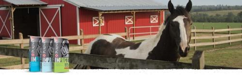 Purina IMPACT Horse Feed
