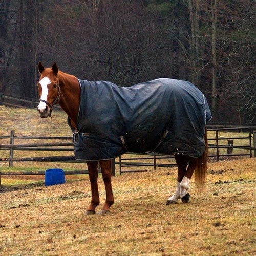 Horse Blanket Cleaning & Repair