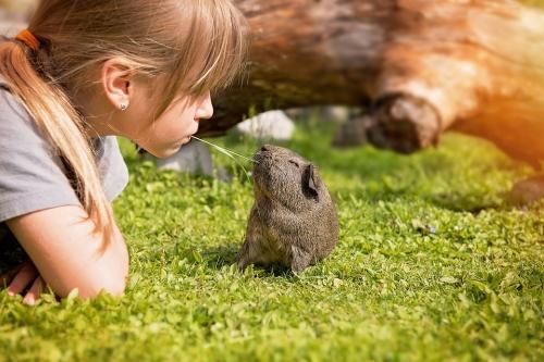Guinea Pig Adoption Day
