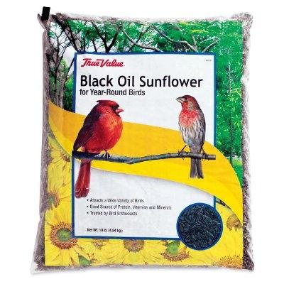 Black Oil Sunflower Seed, 10 lbs.