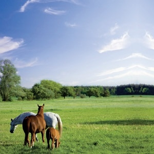 Horse Pasture Grass Seed Mix