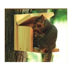 Squirrel Munch Box Feeder
