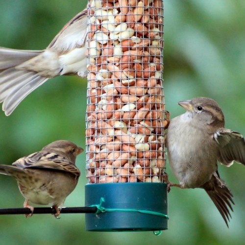 Bird Feed Blow Out Sale!