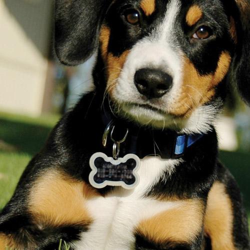 York County Dog Licenses