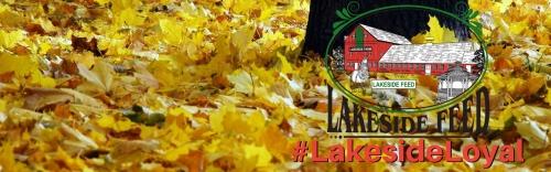 Are You #LakesideLoyal?