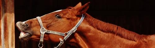 Purina® Horse Feed