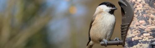 Keep Your Wild Birds Well Fed