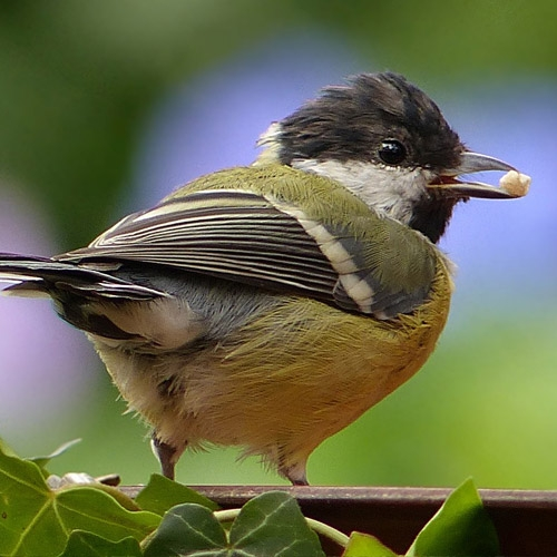 Bird Department
