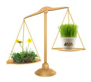 grass scale
