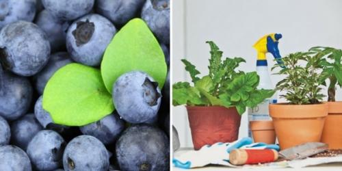 Master Gardener Presentations at Bluebonnet Library