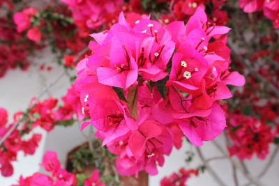 Blooming Tropicals