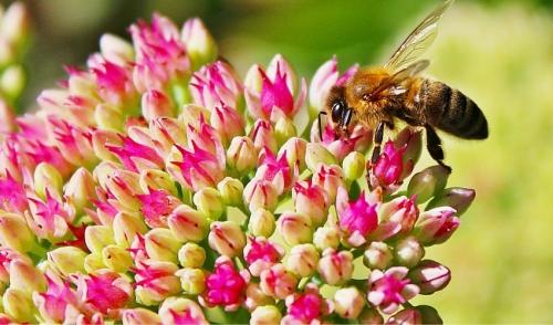Summer Bee Cabin