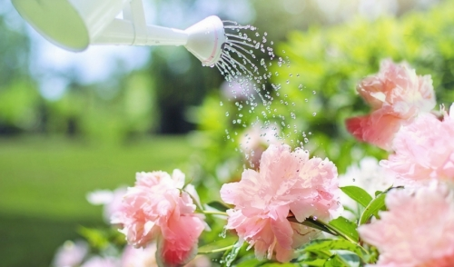 Gardening Tip: Summertime Watering